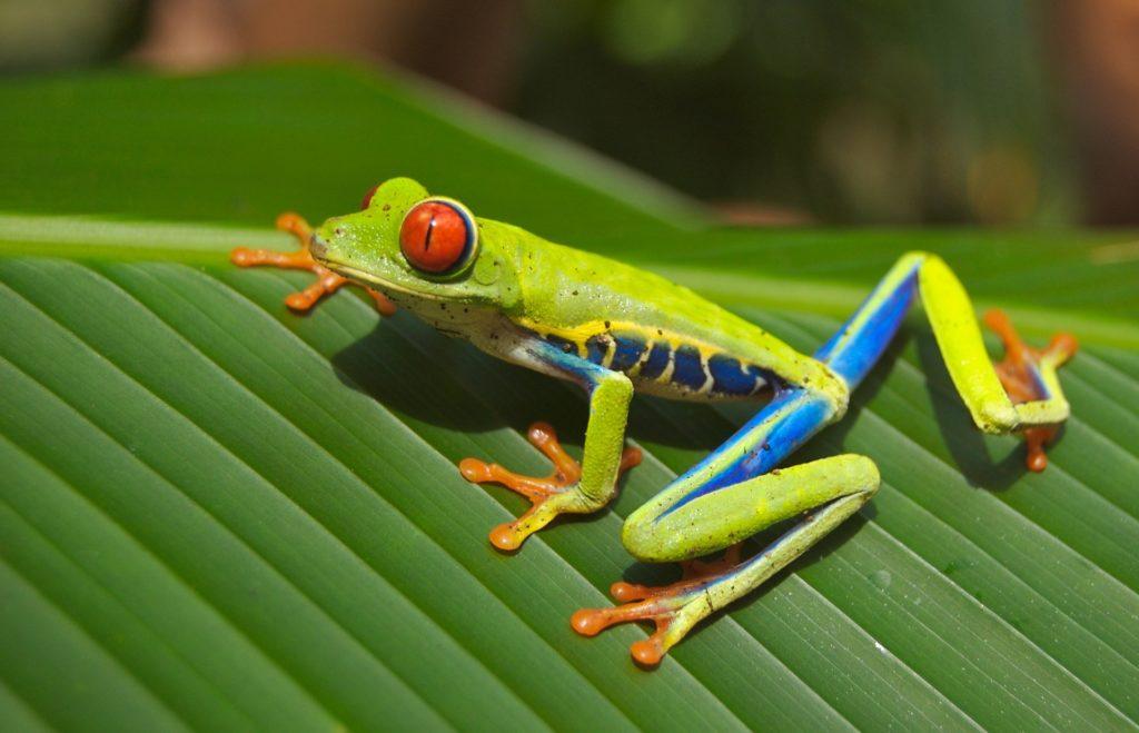 Obraz żaby, David Mark z Pixabay, wizualizacja dużego problemu